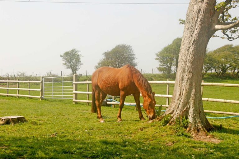 An image of a horse at Reach Court Farm