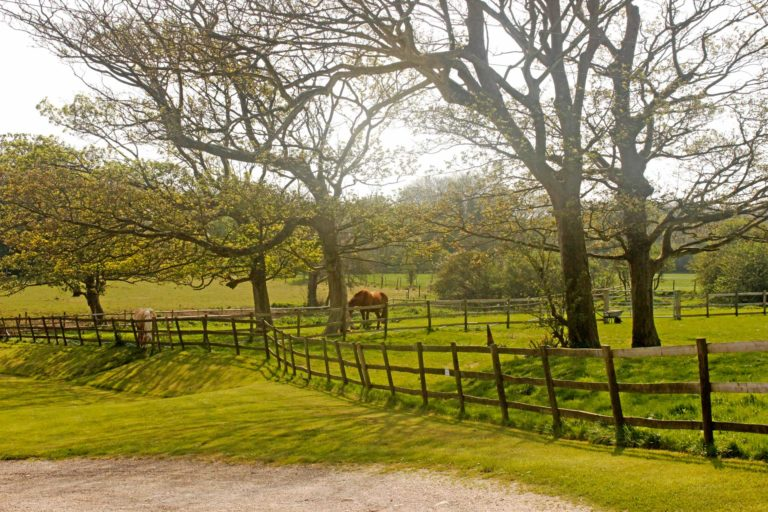 Image of Horses